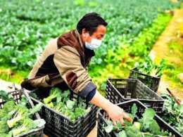 大棚種植蔬菜的成本到底有多高?