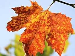 拍美秋天並不難,這6個簡單的秋天攝影技巧,幫攝影新手拍美秋天