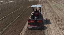 花生種植時,硫酸鉀和氯化鉀有沒有區別?看看農戶的用法